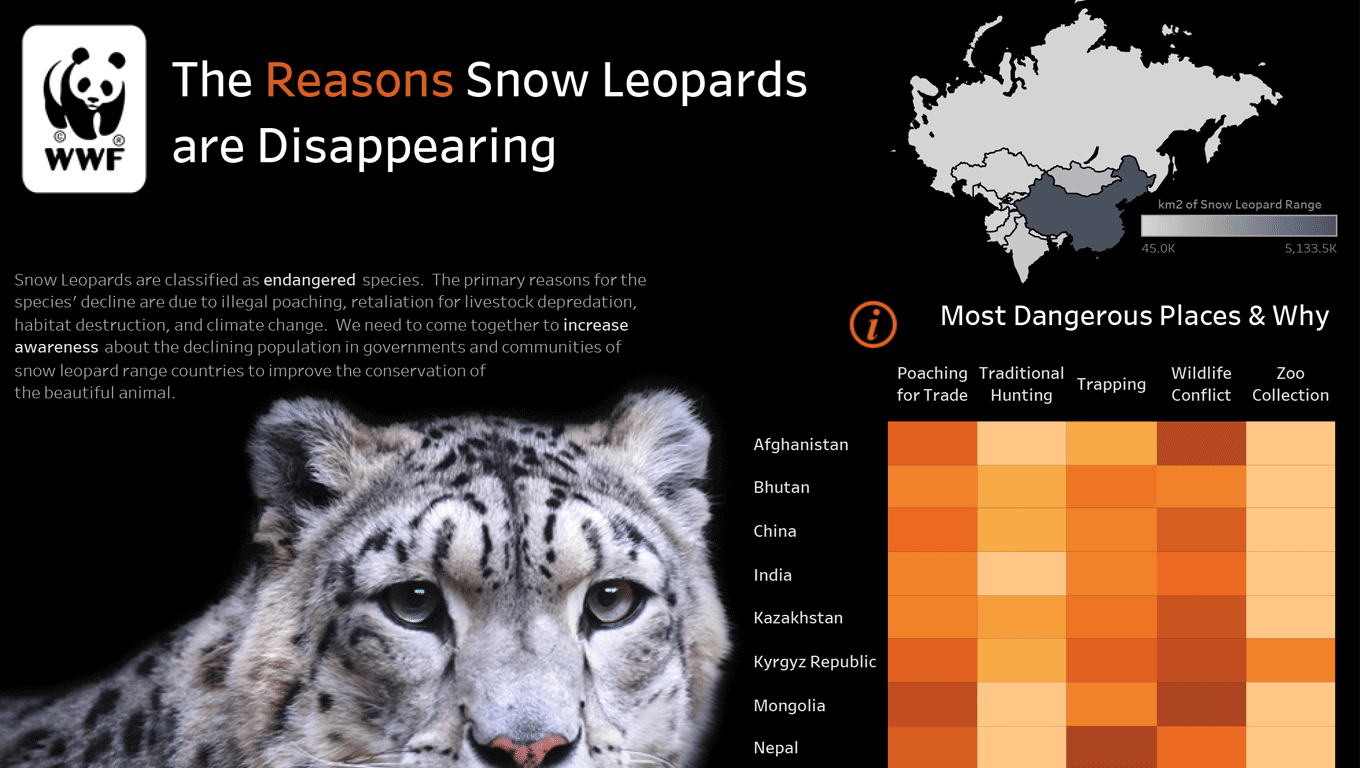 Why Are Snow Leopards Disappearing