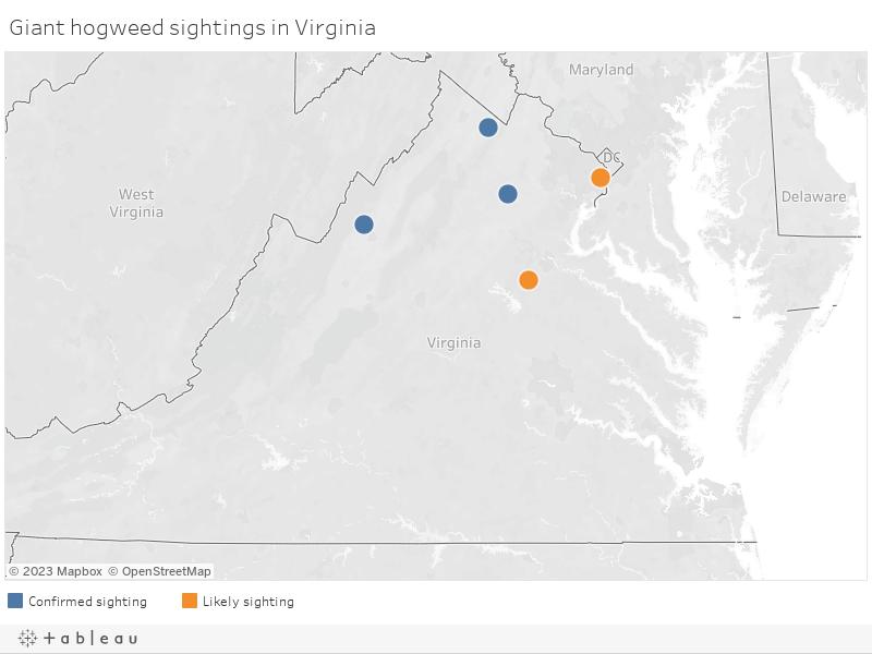 Giant hogweed sightings in Virginia