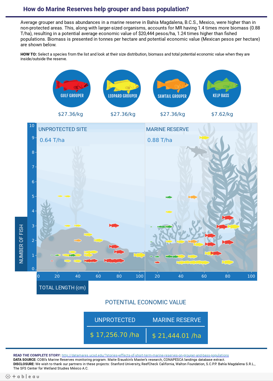 How do Marine Reserves help grouper and bass population?