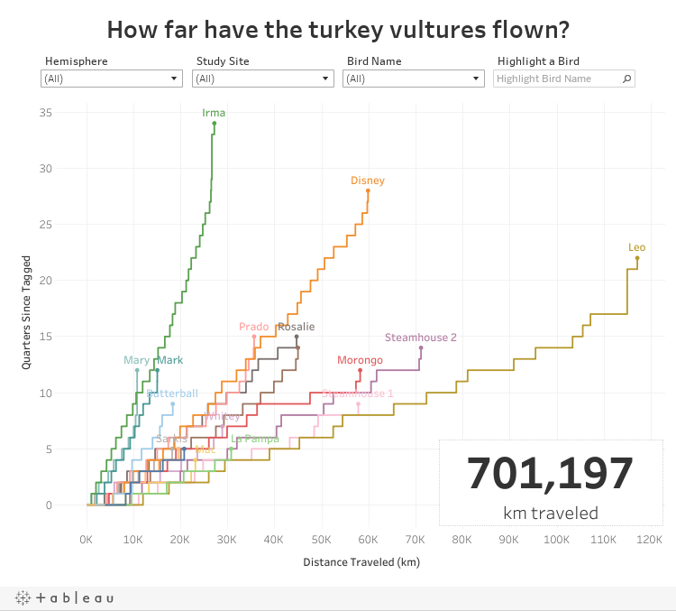 How far have the turkey vultures flown?