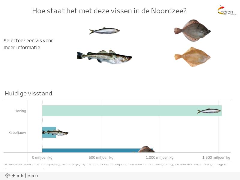 Hoe staat het met deze vissen in de Noordzee?