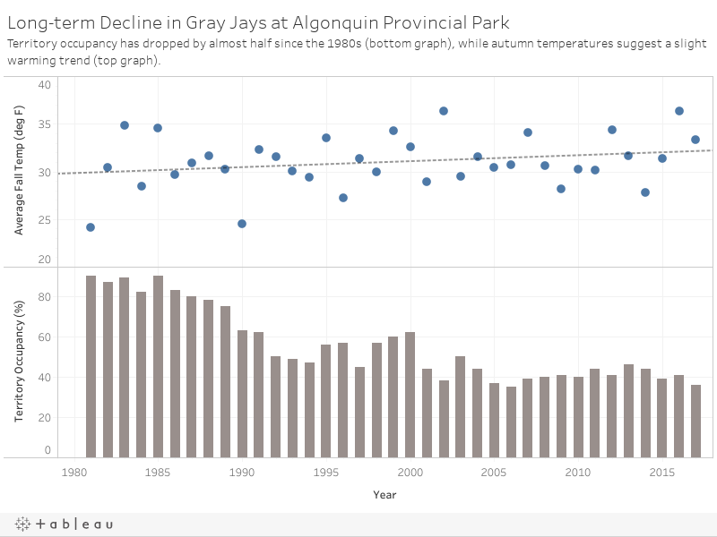 In the last 30 years, autumns have trended warmer while Gray Jay occupancy has crashed